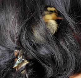 Der biologische Sinn von langen Haaren